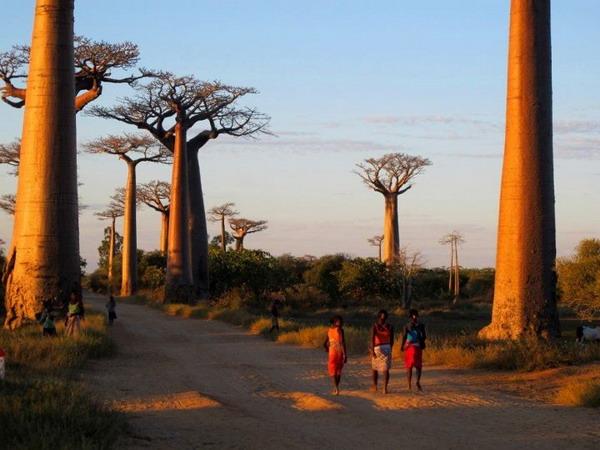 Avenue du Baobab, ماداگاسکار