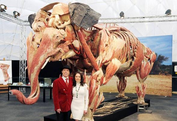 یک فیل در موزه دکتر گونتر فون هاگنس
