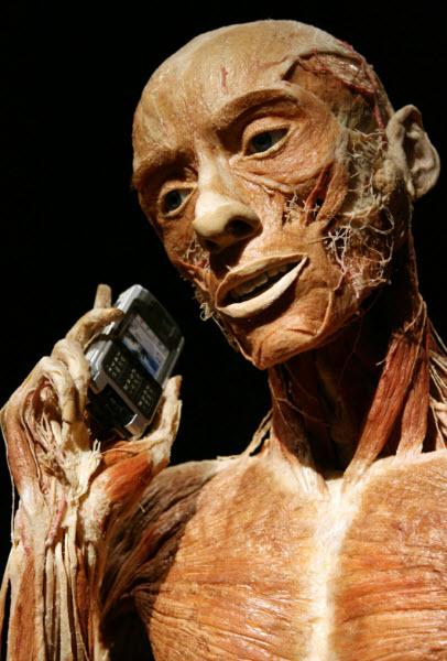 آناتومی بافت ماهیچه ای یک انسان