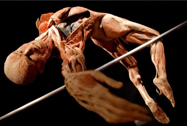 آناتومی یک ورزشکار در حین پرش