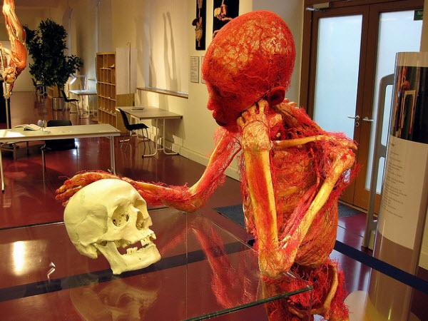 آناتومی رگ های یک انسان