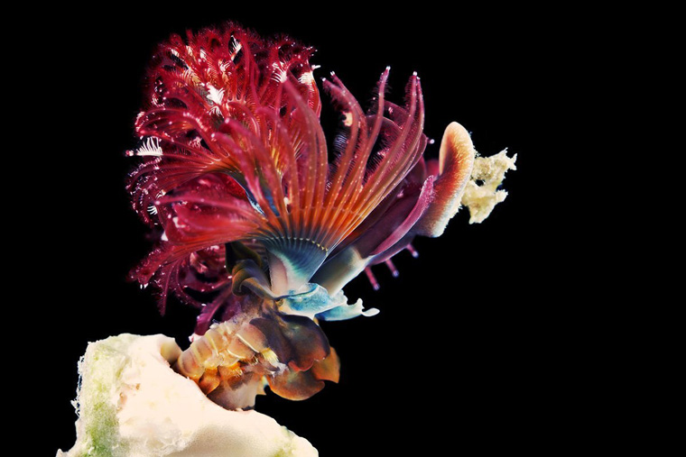 04-best-wildlife-pictures-2014
