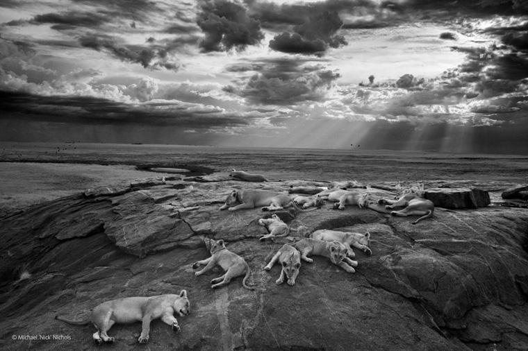 08-best-wildlife-pictures-2014