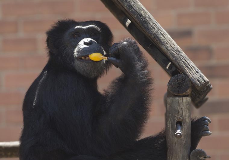 APTOPIX Brazil Zoo