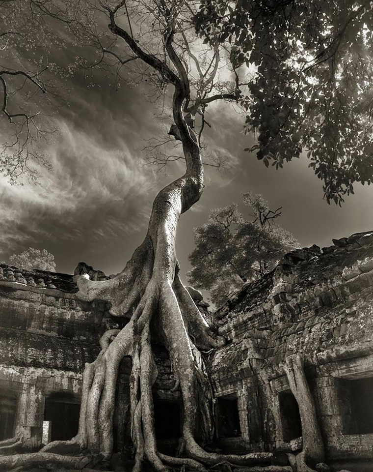 ancient-trees-beth-moon-17