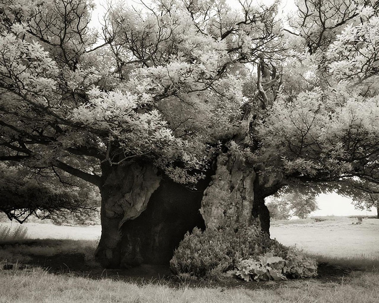 ancient-trees-beth-moon-19