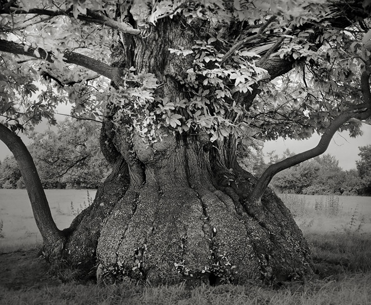 ancient-trees-beth-moon-4