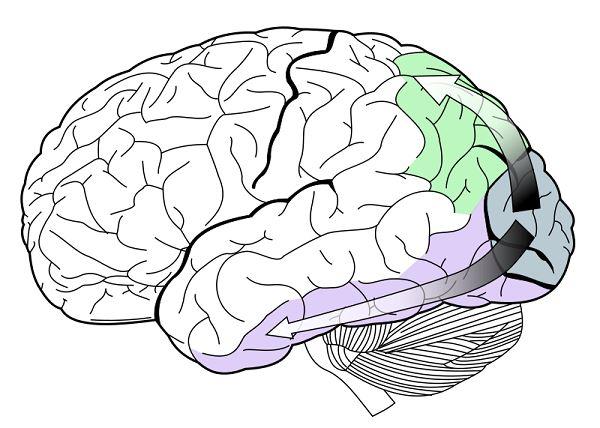 brain-on-vision
