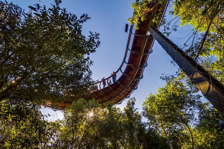 tree-canopy-walkway-path-kirstenbosch-national-botanical-garden-14