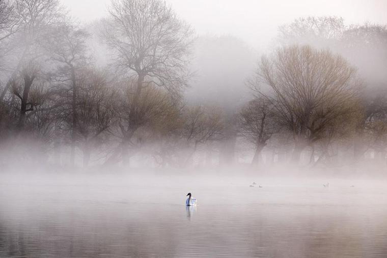 Fog Rolls in at Richmond Park in London