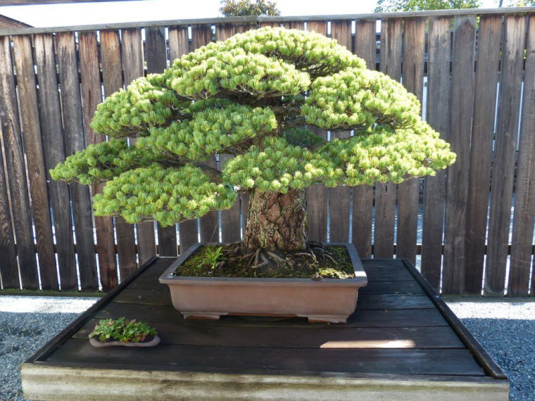 2013-09-30-bonsai-003