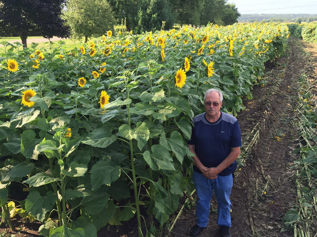 babbettes-seeds-hope-cancer-sunflower-four-miles-16